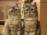 """养猫的12个""""辛酸""""体验,准备养的你确定不来看看?"""