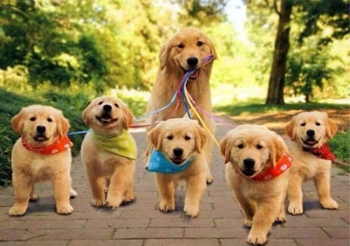 狗爸爸、狗妈妈与他们的幼崽们