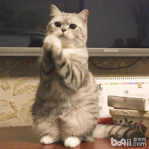 猫咪拜拜的姿势 实在是太萌了呢!