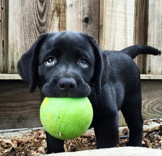 狗狗一辈子都喜欢的玩具