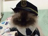 活捉一只黑猫警长