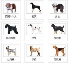 必威官网下载品种