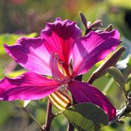 观花植物栽培