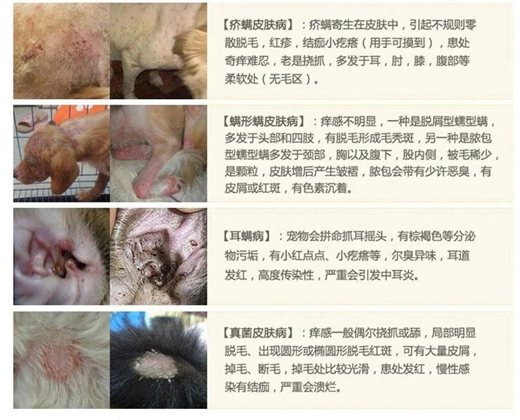 金盾 宠物消炎杀螨膏20g 治疗猫狗蠕形螨疥螨细菌真菌皮肤病