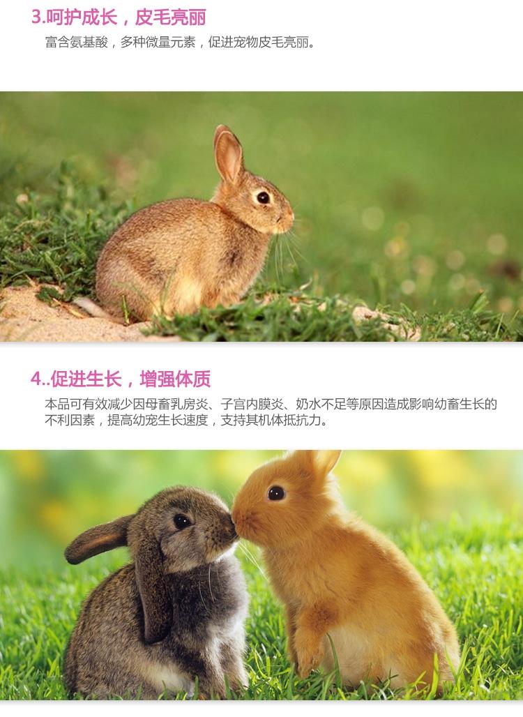 PetSAGA贝仙小动物代乳 断奶过渡