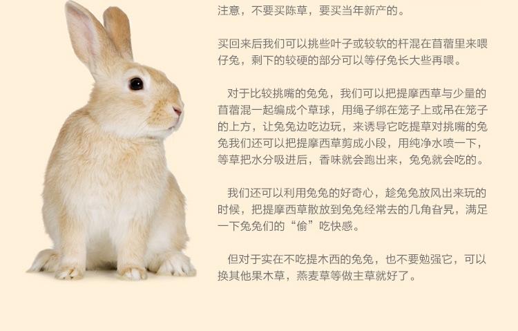 提摩西草500g 兔粮 草场直供