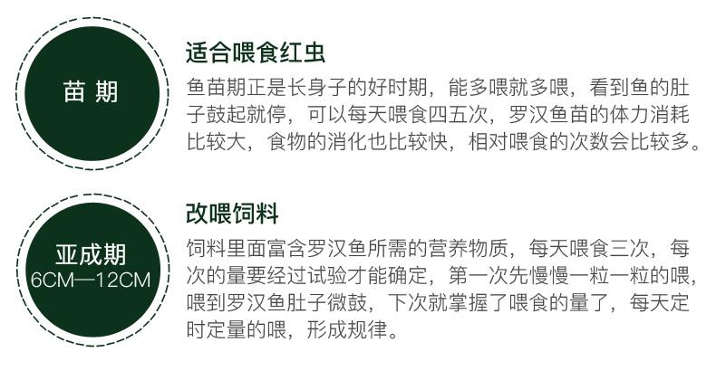 仟湖傲深 炫宝罗汉鱼快速突头饲料 中粒