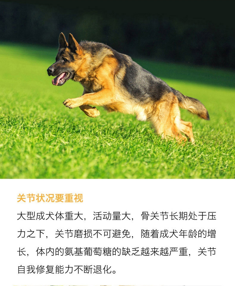 醇粹 大型成犬粮关节亮毛配方天然狗粮 15kg