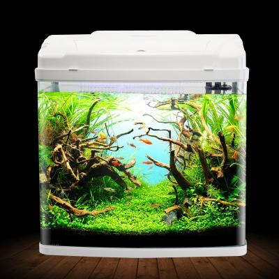 生态鱼缸造景步骤图片