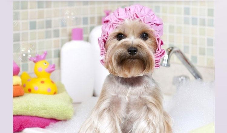 特瑞仕  宠物猫狗洗澡沐浴吸水毛巾