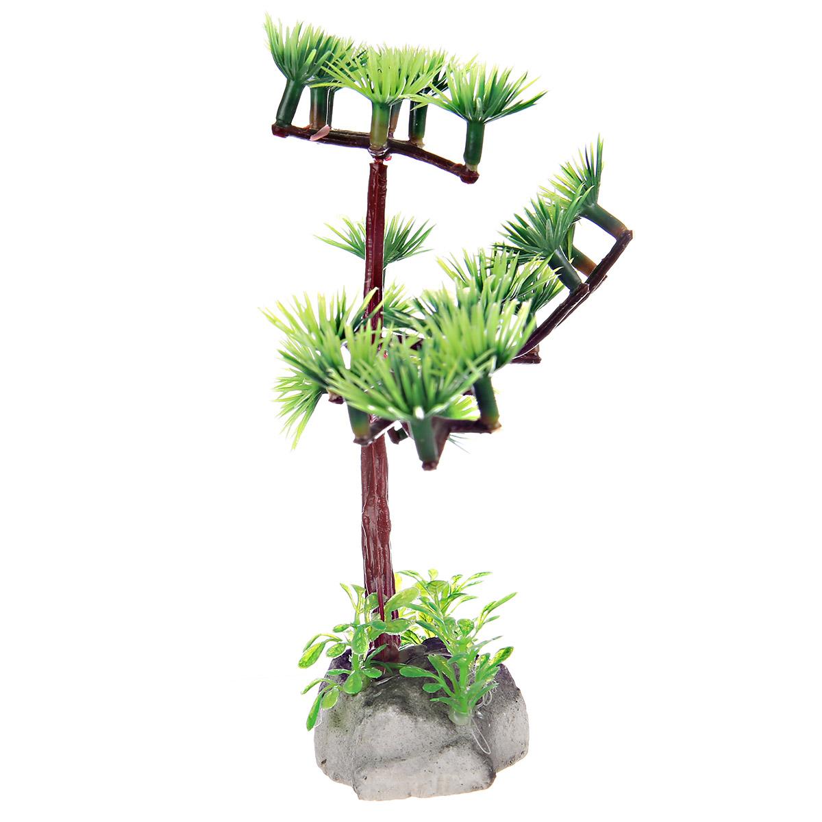 像松树一样的水草