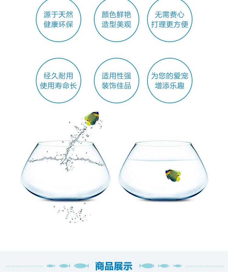 聚宝源 天然海螺贝壳套装海星摆件 鱼缸装饰造景