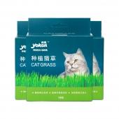 怡亲 多可特许愿种植猫草 19g*3 (猫草种子 培育盒 培育土)