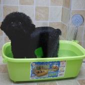 爱丽思IRIS 宠物浴盆  小型犬洗澡盆