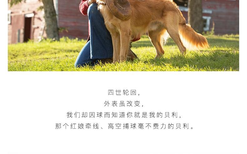 怡亲 犬用训练玩具橄榄球《一条狗的使命》纪念款