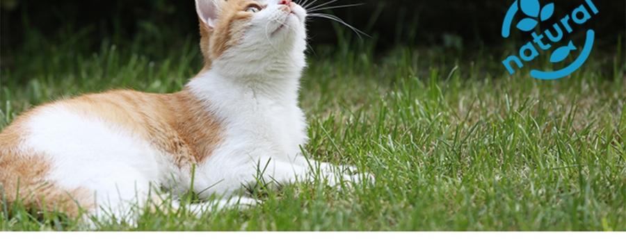 Orijen渴望 六种鲜鱼海藻配方全猫粮5.4kg【保质期至2019年8月】