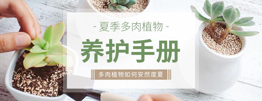 多肉植物夏季养护手册