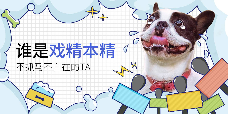 【每周-社区活动-招新】宠物圈里最容易拿奖的活动,没有之一