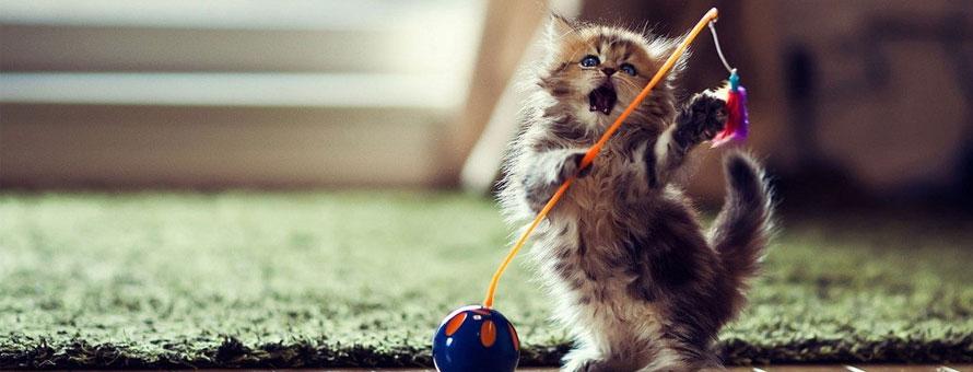 征服喵星人——揭秘猫咪训练技巧