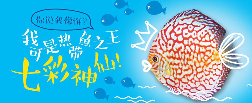 你说我像饼?偶可是热带鱼之王七彩神仙!