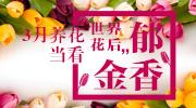 """3月养花,当看""""世界花后""""郁金香"""