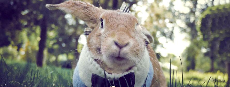 宠物兔训练方法大集合