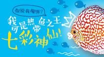 你说我像饼?我可是热带鱼之王七彩神仙!