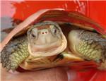 龟龟得了疥疮怎么办