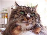室内养猫需注意四点