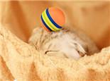 让猫咪在室内也能快乐生活的小窍门
