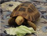 如何判断陆龟是否患有结石病