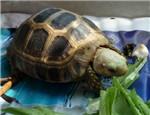 陆龟肺炎治疗心得