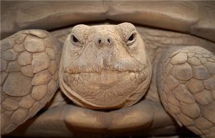 陆龟常见疾病的治疗方法