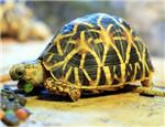 陆龟缺钙所致的常见疾病