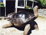 陆龟住院要怎么护理