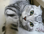 为什么训练猫猫会困难重重
