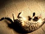 训练猫的理论基础