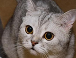 想要训练猫就要先了解猫