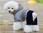 狗狗衣服该如何清洗