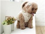 狗狗穿衣服的利与弊