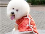 狗狗穿衣存在着哪些隐患