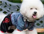狗狗喜欢穿衣服吗