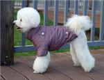狗狗穿衣的特殊注意事项