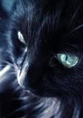 ﹏Black miaomiao