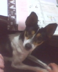Puppy·花椒道格