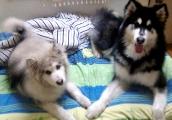 家有2条小贱狗~