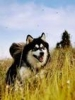 野蛮の大野狼