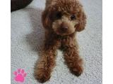 mini是个乖宝宝