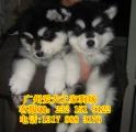 爱犬之家2
