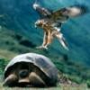 老鹰捉乌龟